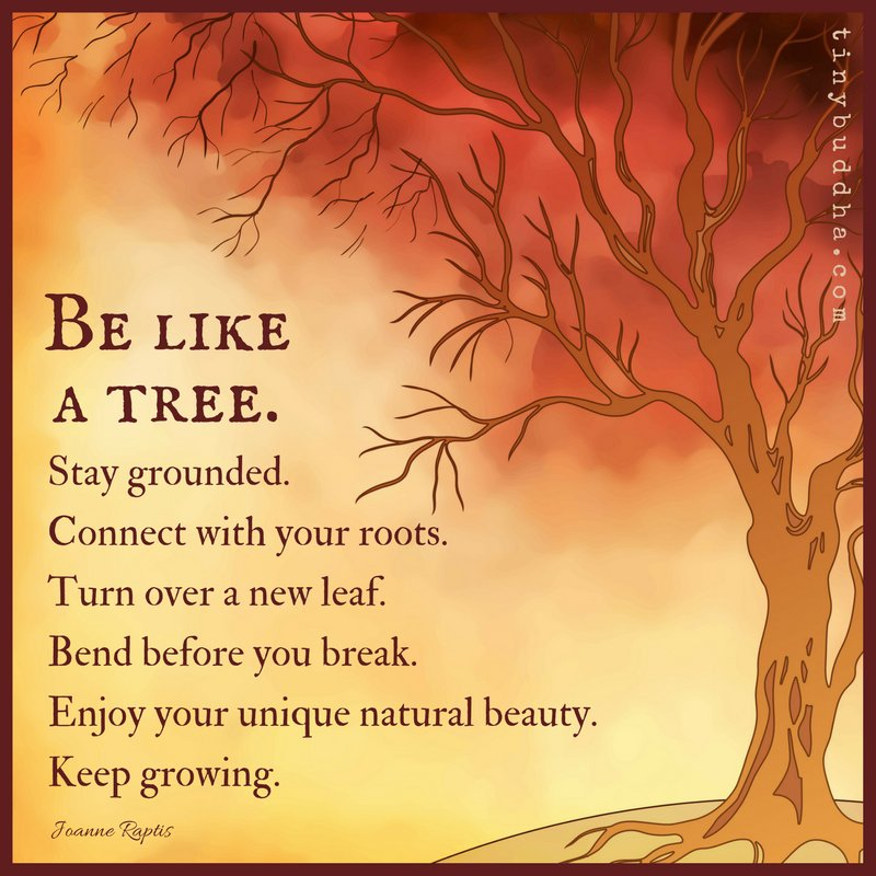 'Be like a tree. Stay grounded. Connect with your roots. Turn over a new leaf. Bend before you break. Enjoy your unique natural beauty. Keep growing.' ~Joanne Raptis