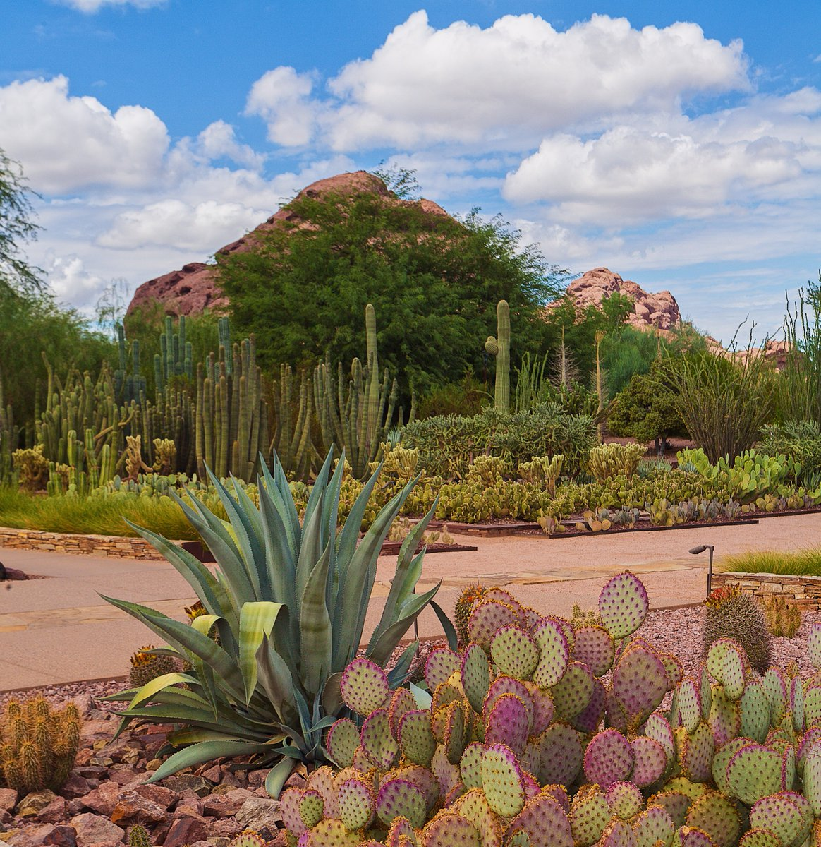 Desert Botanical Garden on Twitter: \