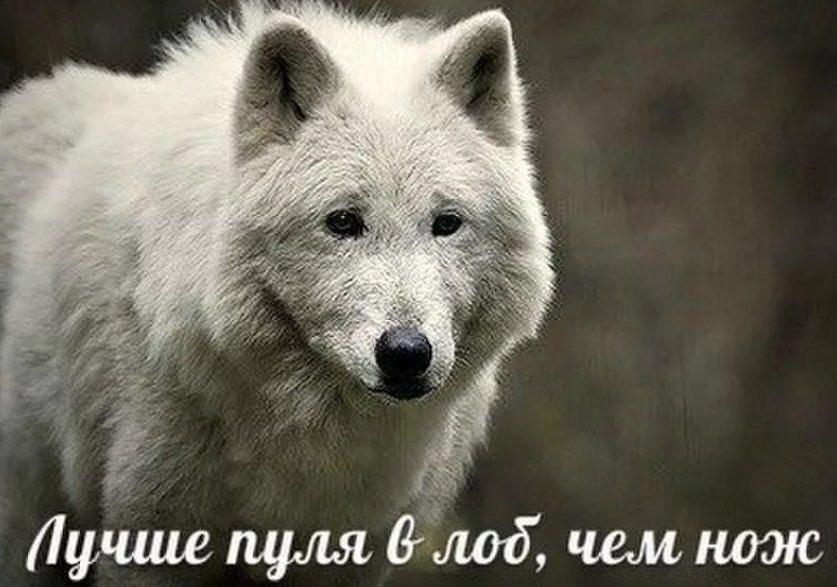 Картинка волков с надписью, солидная для
