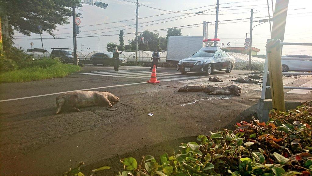 八千代町に大量の豚の死骸散乱の現場の画像