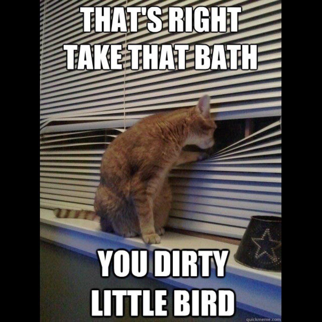 Rachel Starr  - Peeping Tom twitter @RachelStarrxxx bath,kitty,memes