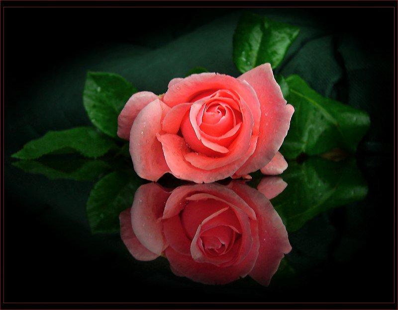 Картинки спокойной ночи и сладких снов с цветами, салют
