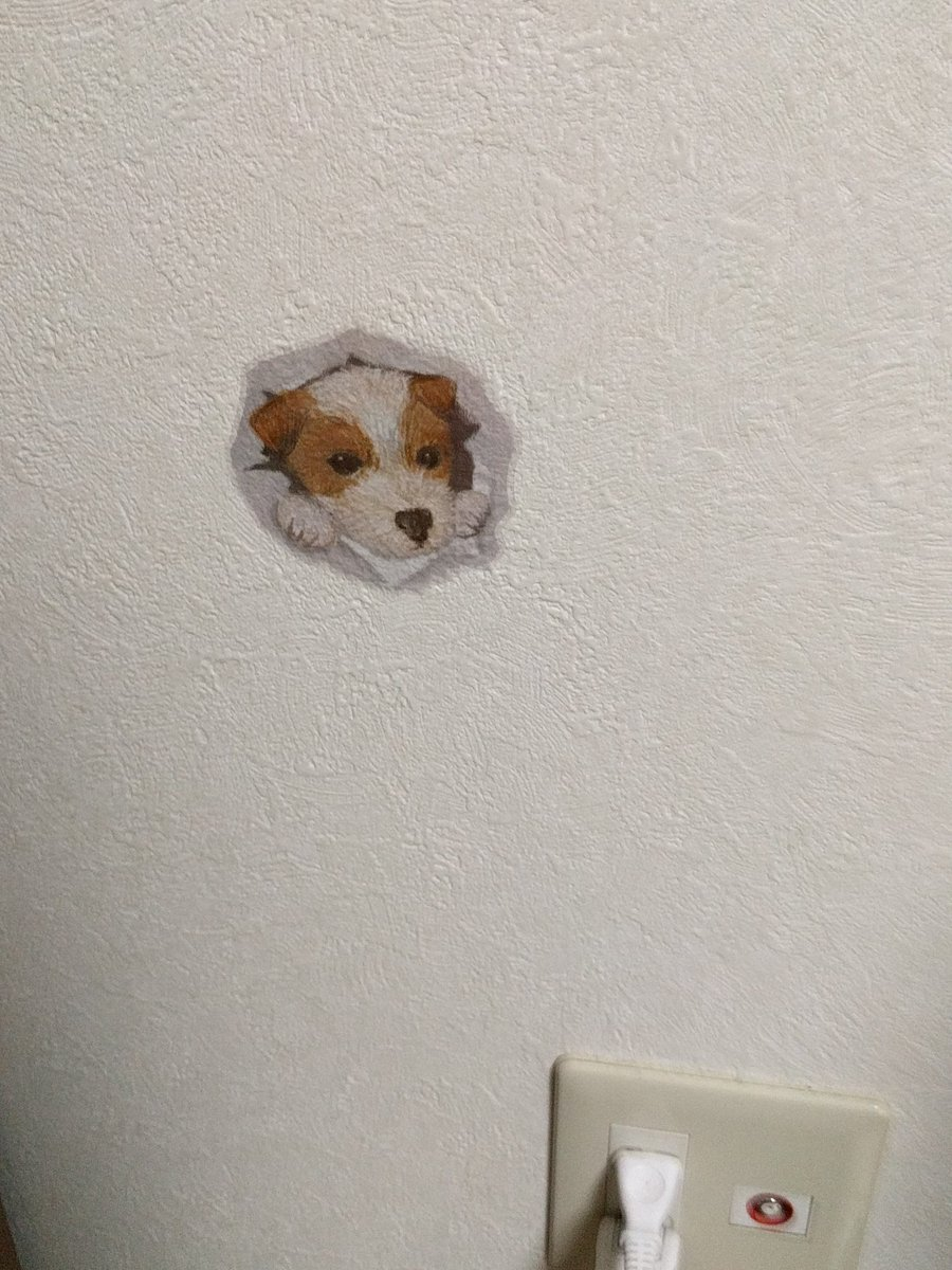 test ツイッターメディア - My new wall sticker from Seria Lil termite buppy かべ壊すワンコようこそ #セリア https://t.co/0RhCLqPfhc