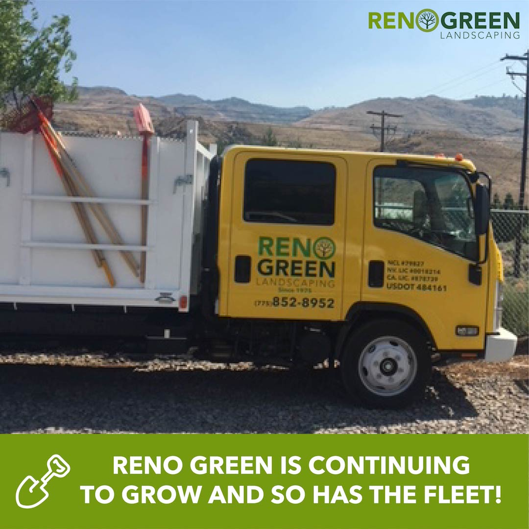 Reno Green Landscaping is continuing to grow and so has the fleet! Check  out our new Isuzu Dove Tail that just got it's yellow paint and new logo  decal. - RenoGreenLandscaping (@RenoGreenNV) Twitter