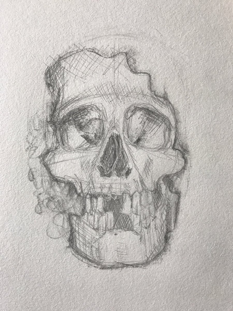 Lex On Twitter Sometimes You Just Gotta Draw A Skull Thinking About Surrounding It With Some Flowers Or Succulents Toss In A Few Bugs Possibly Make A Watercolor Version Of This Sketch