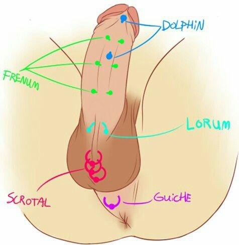 Piercing lorum Genital (M)