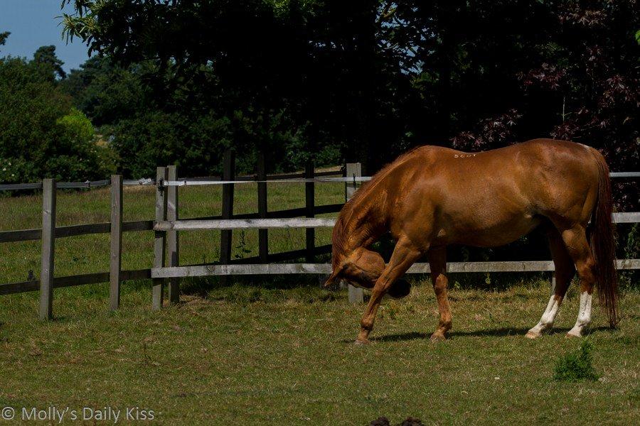 Day 206 – Horses andfreedom https://t.co/NDgOa2LjMT...