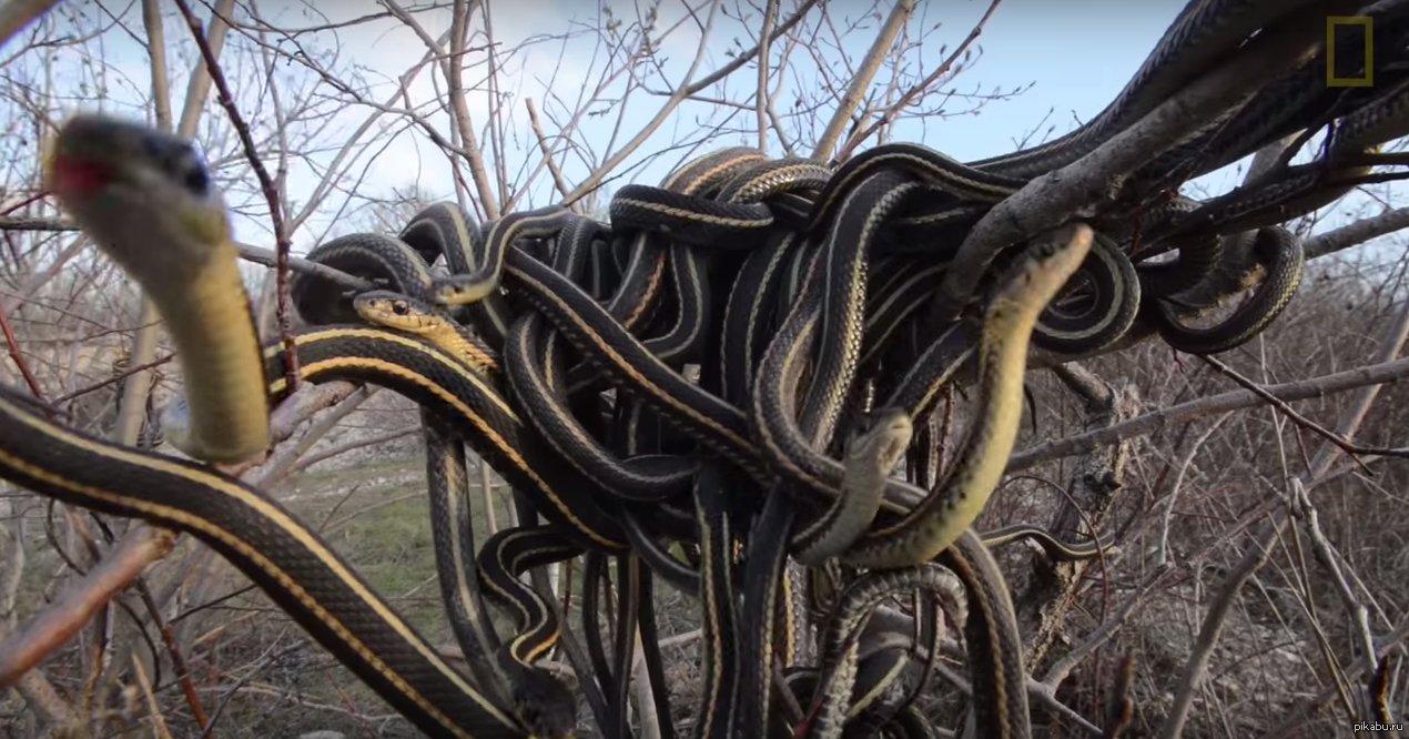 полистать, можно женский коллектив змеи фото бесплатно красивые