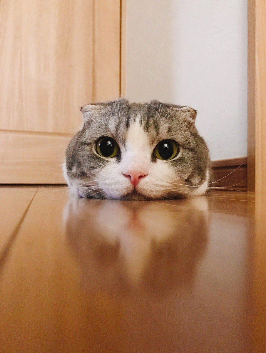 トイレの前に、ツムツムみたいの落ちてる…