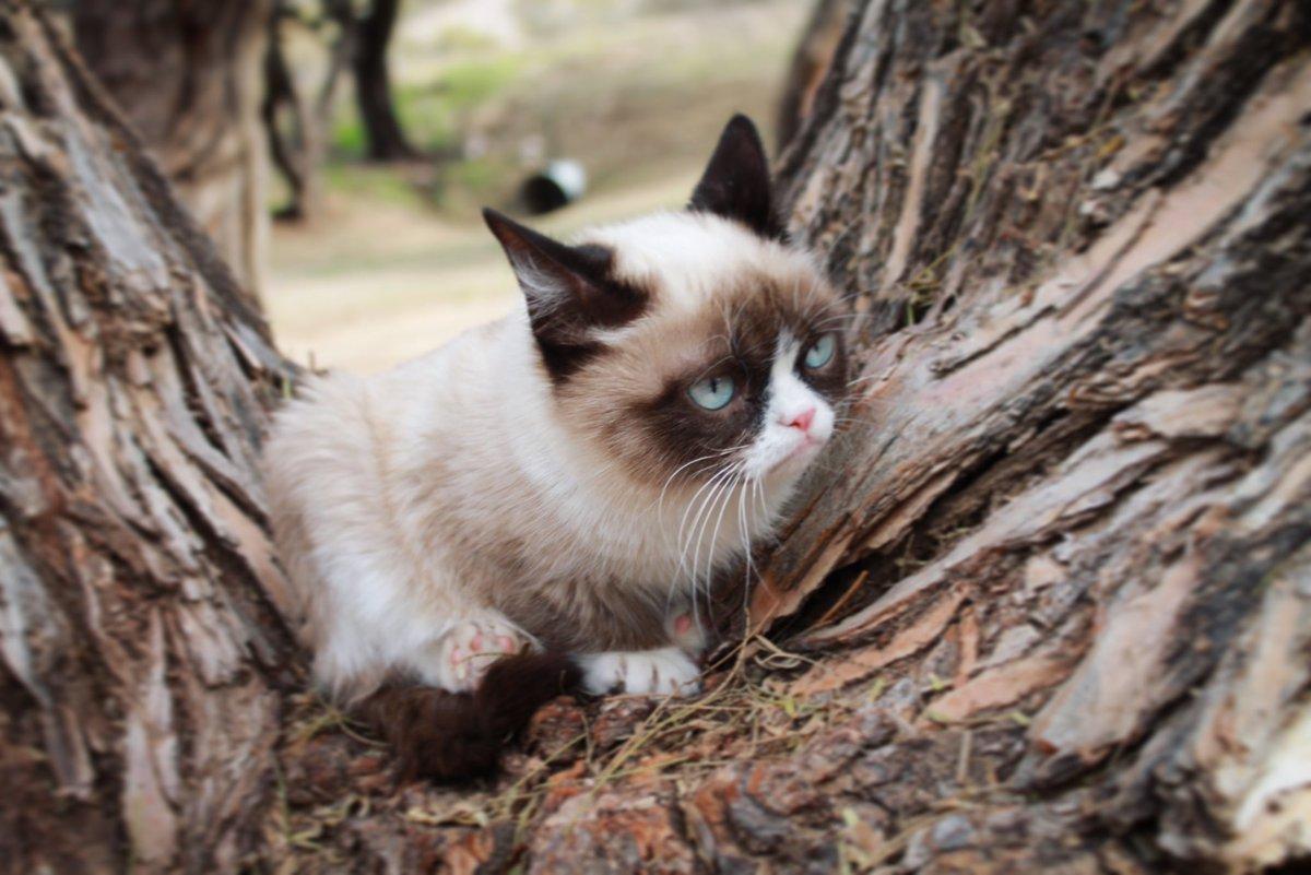 Grumpy Cat (@RealGrumpyCat) on Twitter photo 2018-07-14 00:13:58