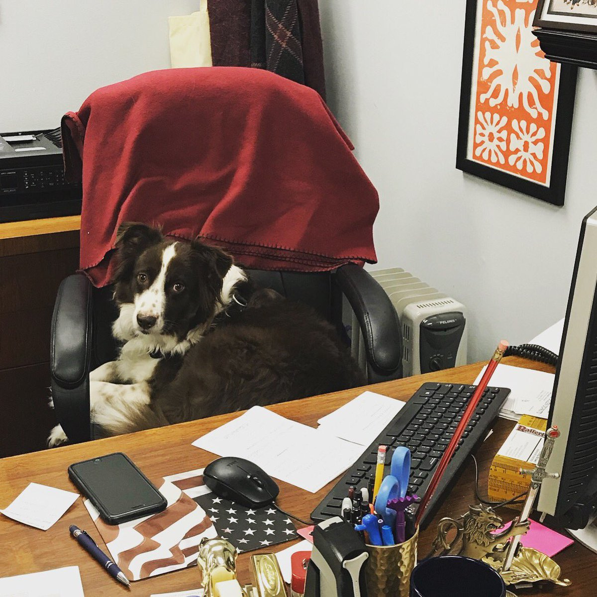 #TakeYourDogToWorkDay Latest News Trends Updates Images - MRACC7