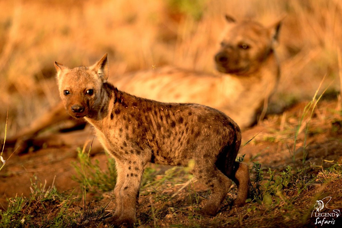 legend_safaris photo