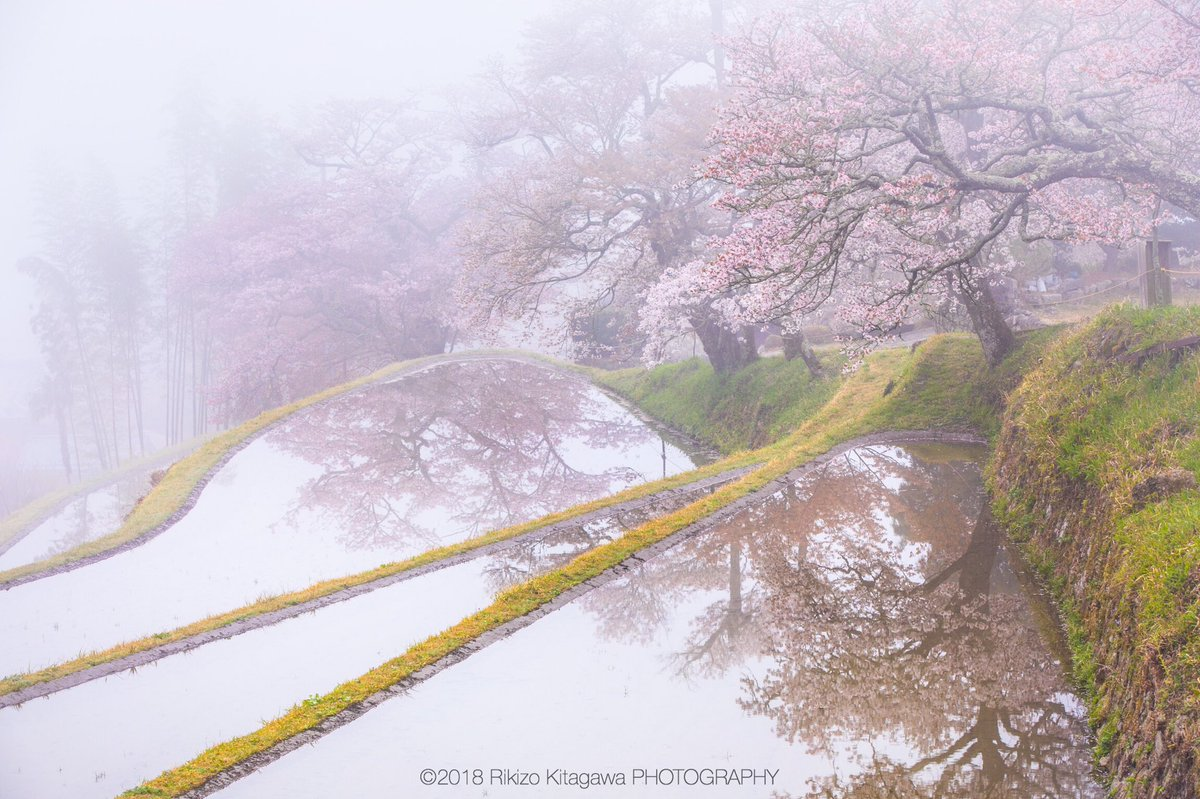 Twitterをはじめて丸一年ということもあり、久しぶりの投稿は上半期で特に心に残る靄と花のある風景から四枚を選んでみました。  1.春告草のしらべ 2.朝霧の里 3.八仙花薫る山の寺にて 4.光のVeil