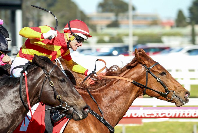 #KingCallow working hard! He delivers a great ride aboard Magnesium Rose @MelbRacingClub. REPLAY/RESULTS - Photo