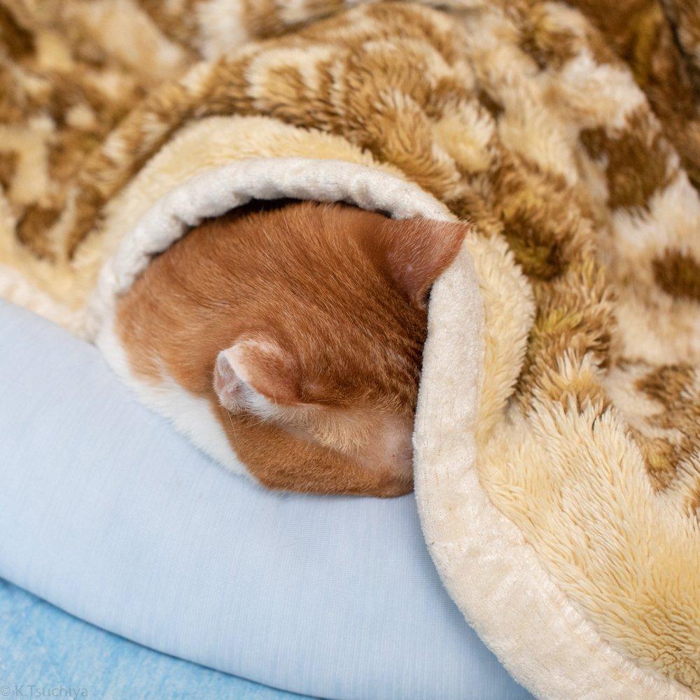 クーラーの効いた部屋で毛布に潜るの最高ですよね