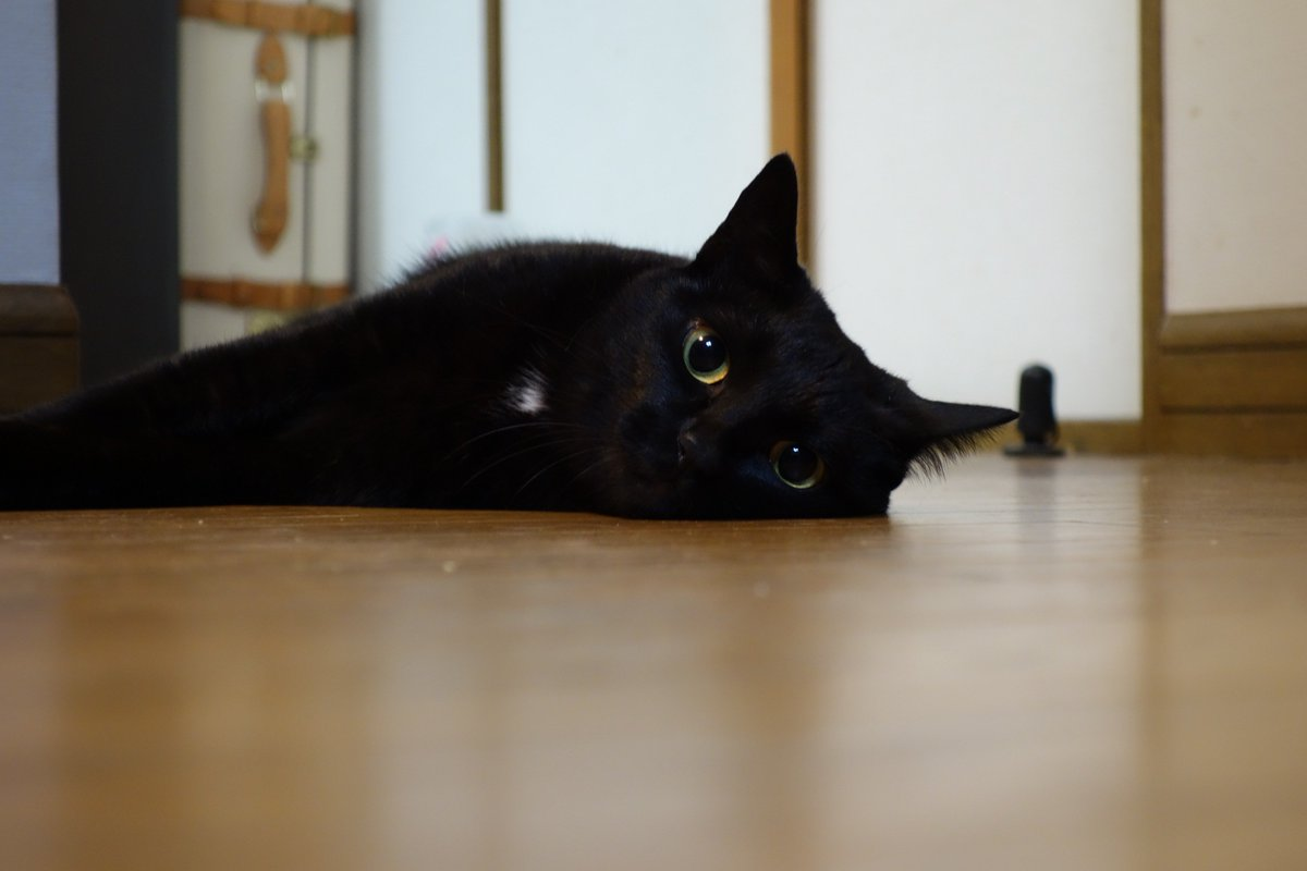 黒猫はクールなイメージに反して、とても人懐こくて甘えん坊