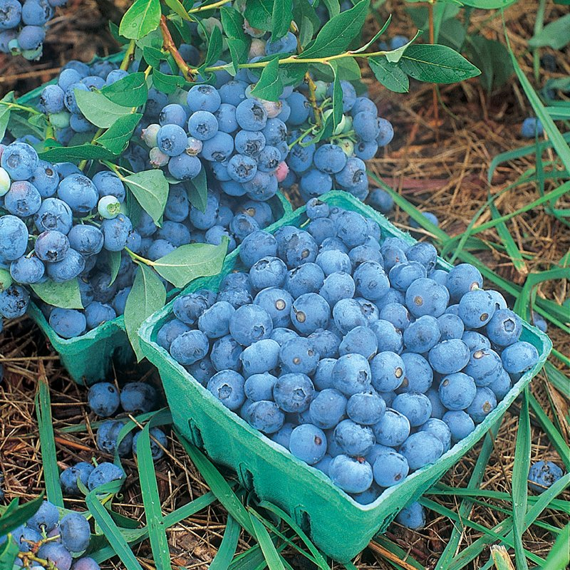 Yummy Fresh Fruit - grapes blueberries strawberries mangos 🍓