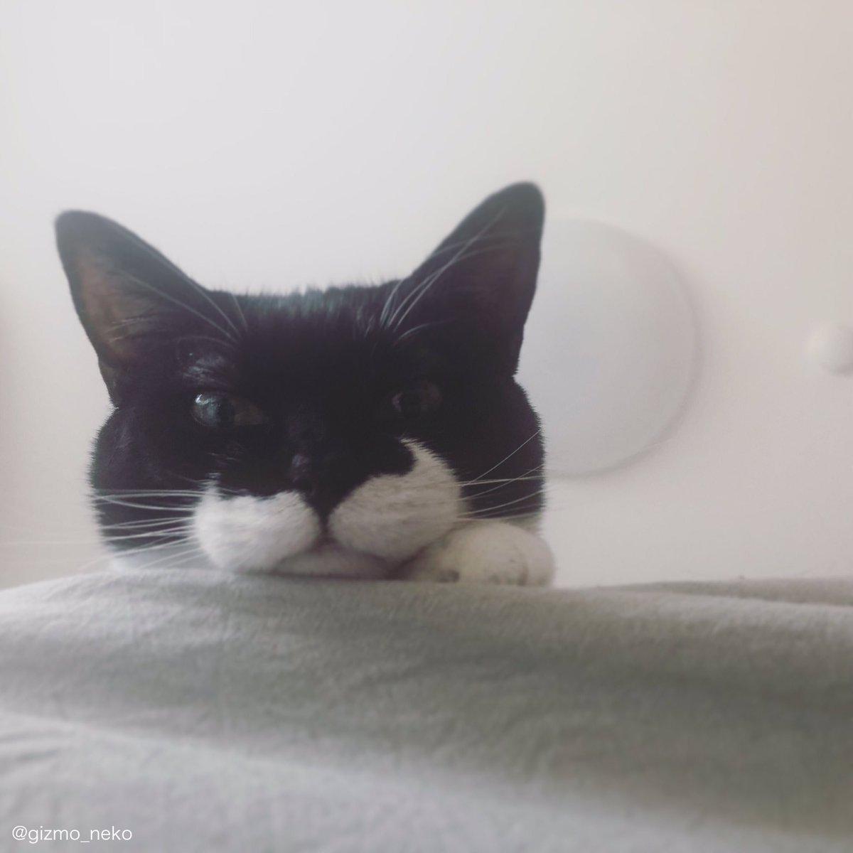 床に寝転がってスマホいじってたら ベッドの上から猫出てきた