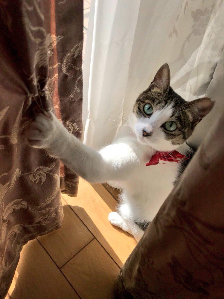 (Yes) (※同居猫には、ベランダに出る前に伸びをして手を上方向へ伸ばすという謎の癖があるので、よく引っかかります。ニンゲンが引っ掛けているわけではありませんので、念のため。)