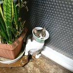 丁度よい大きさw猫にエリザベスカラーの代わりに付けたもの!
