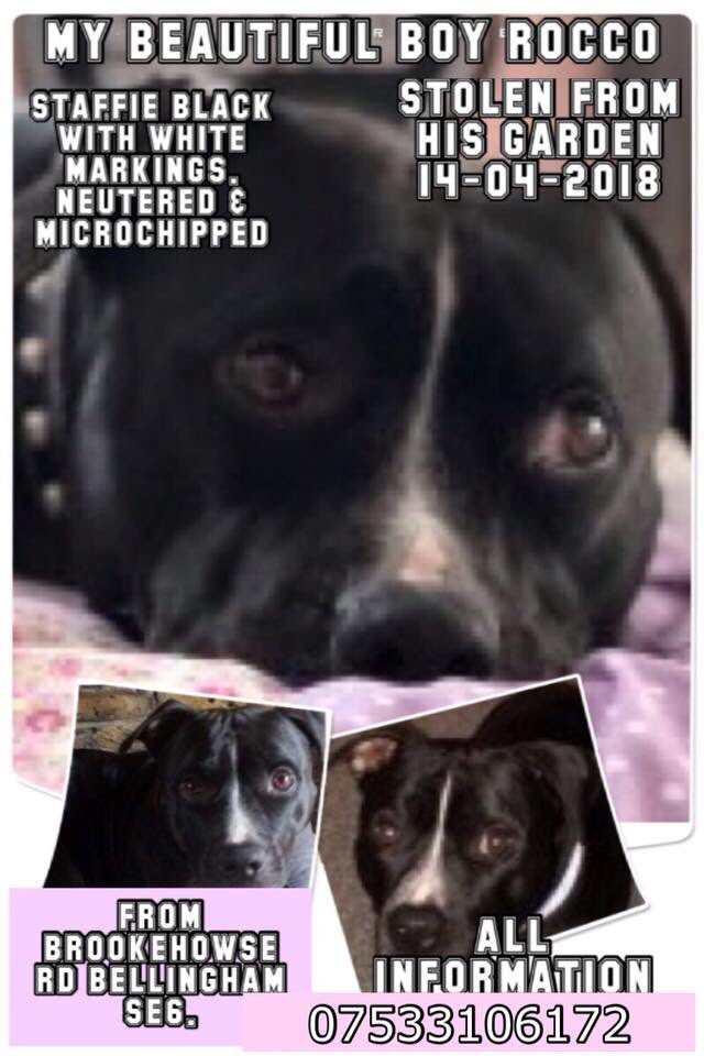 PLS RT for this beautiful boy Stolen from his garden 14-04-2018 family devastated @LeviBabestation Jemma can you get the girls at babestation to Rt please. Hope you are well remember me Beryl we tried to help Toni . <br>http://pic.twitter.com/yls0uHoxrX
