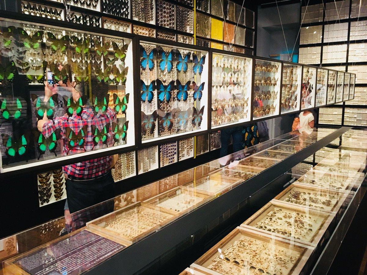 東大の総合研究博物館、入場無料で狂気を感じられるなかなかのエモスポットだった(撮影可)