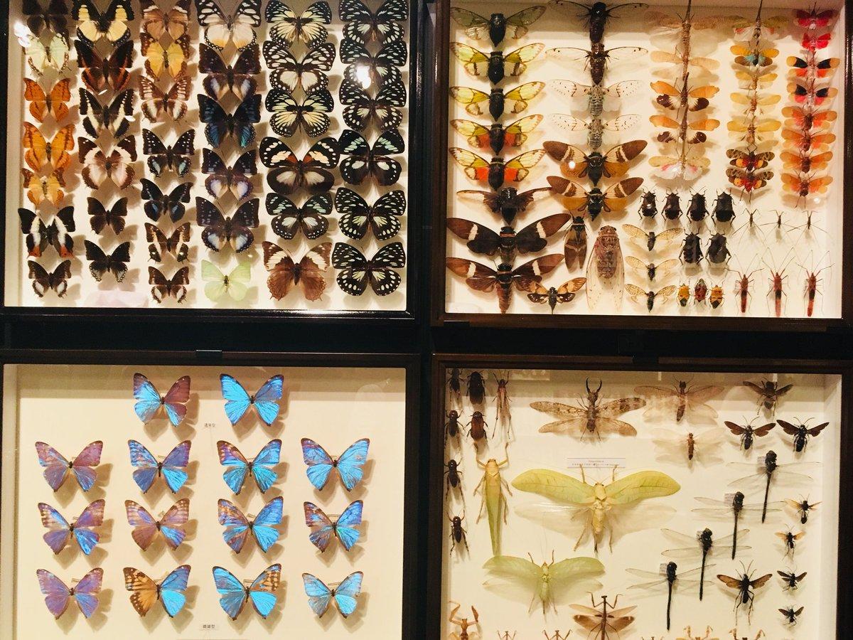 蝶々好きなら行くべき?入場無料で見られる東大の総合研究博物館!