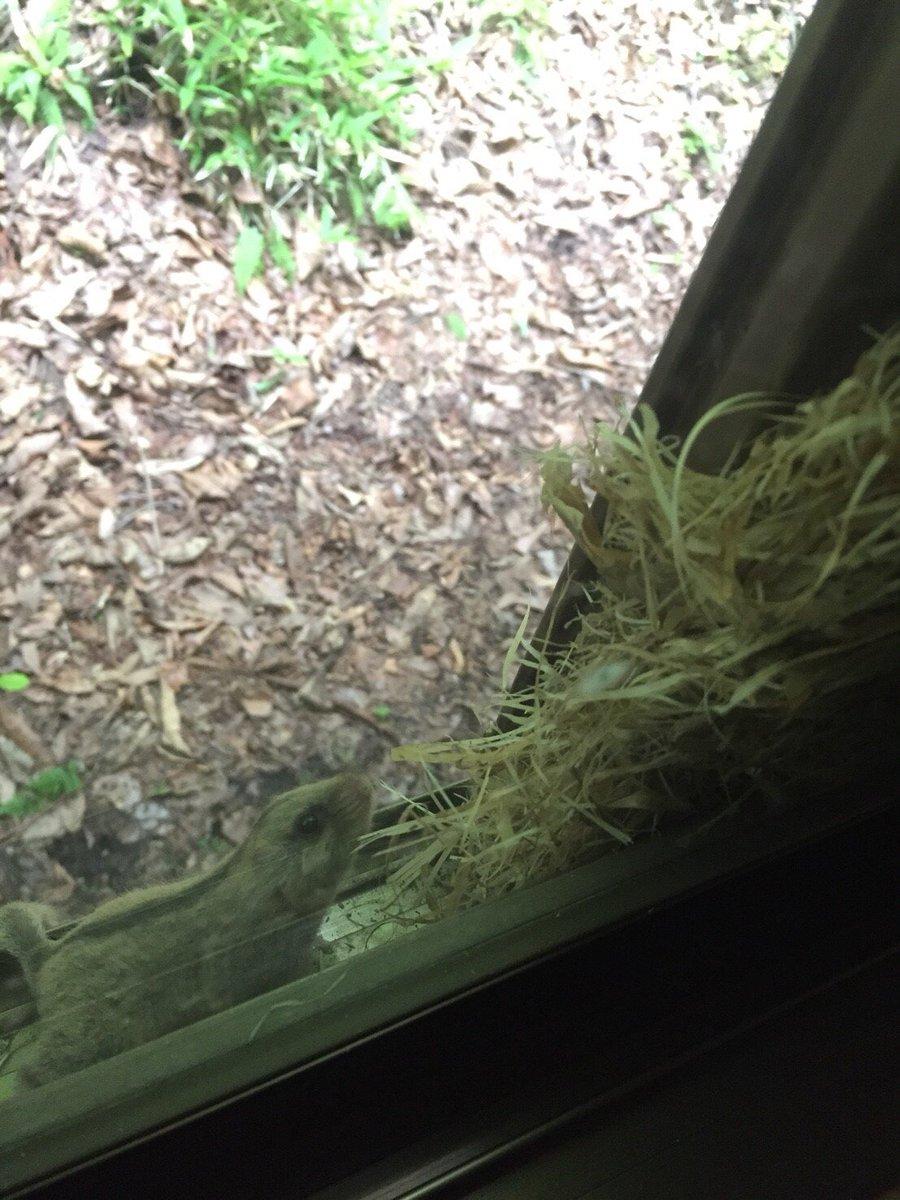 《お礼とご報告》 情報ありがとうございました! 協議結果、巣を撤去する事になりました。 痕跡があったら教えてと思っていたのですが、なんと家主がいました。 まさかのヤマネ。