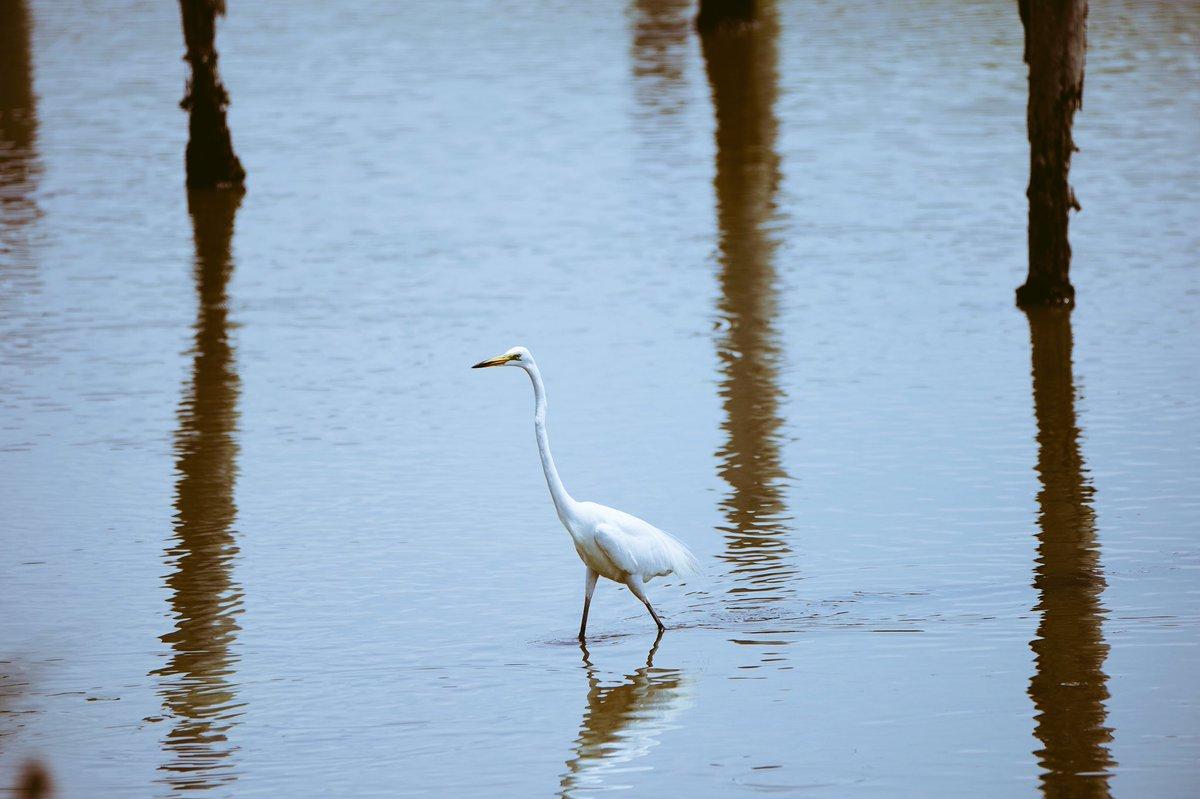 葛西臨海公園の鳥類園楽しい