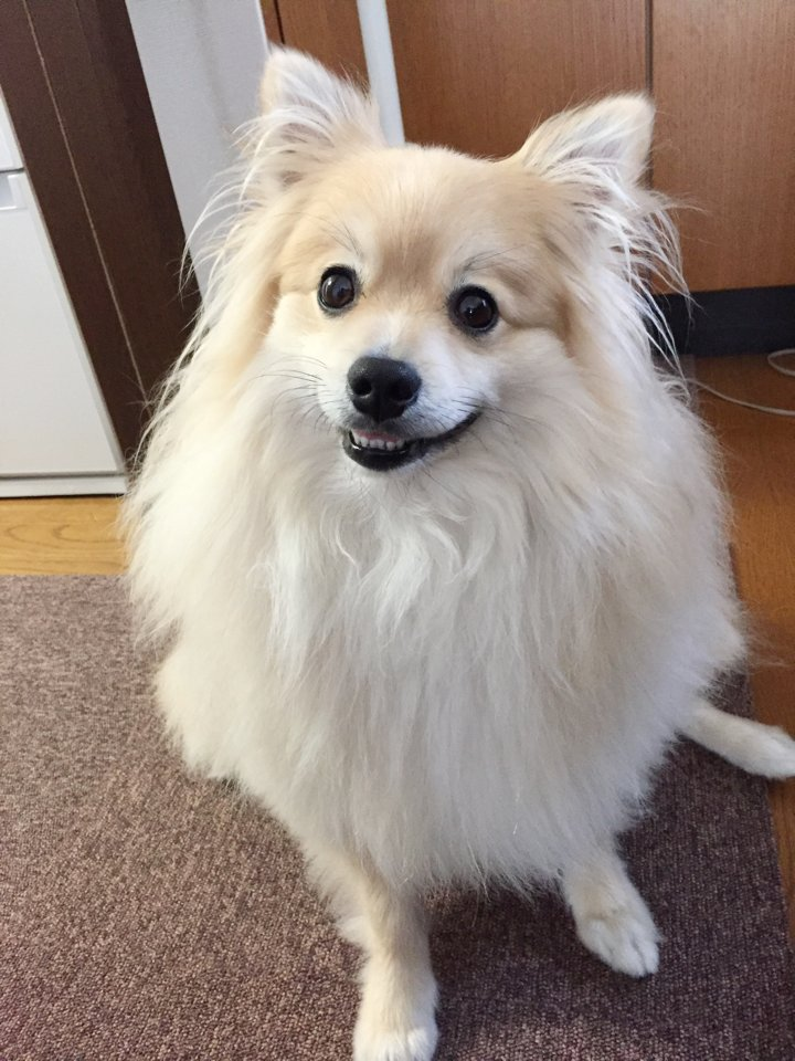 ぽめおの歯が好き