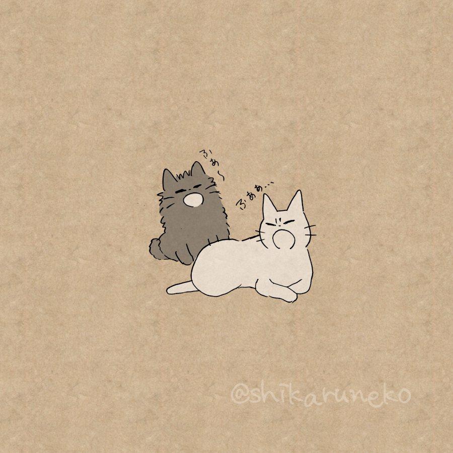 猫を眺めるだけで1日過ごす人を叱ってくれる猫