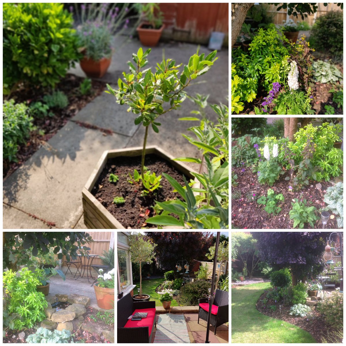 In Gardening Private Ho Es And Public They Are Not Needed My Small Budget Garden Is All Natural Beefriendlypic Twitter Opevwranag