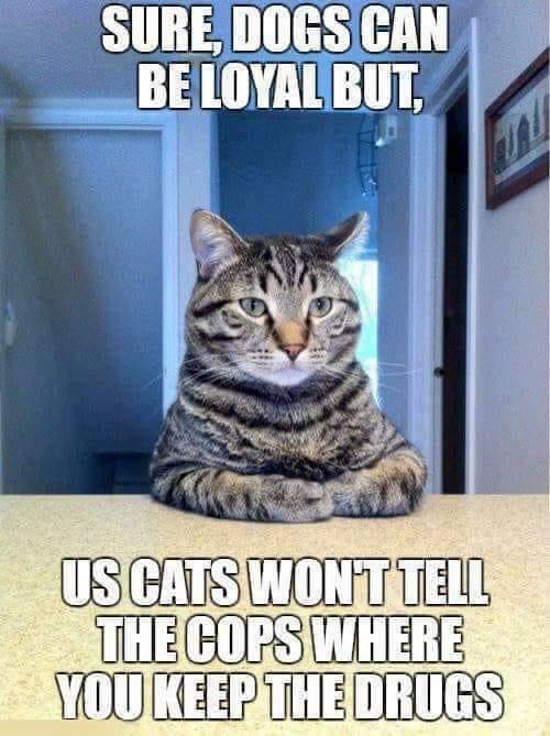 #PETS #Cats #Dogs #Libertarian #Politics