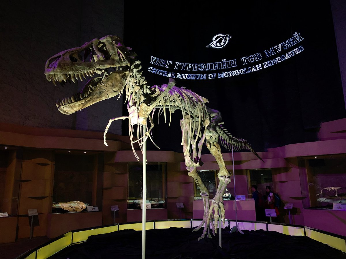 Got to see Tarbosaurus baatar in person yesterday when we visited the Central Museum of Mongolian Dinosaur. Today is the first day of the @MongolianDinos education workshops where we'll talk with museum professionals from all over Ulaanbaatar! I'm so excited. Let's educate! <br>http://pic.twitter.com/61pMQ1KWJr