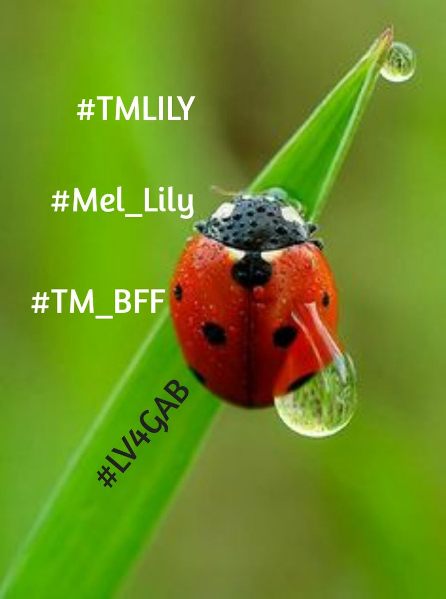 RETWEET ONLY IF YOU  #F4F #TMLILY #RT2GAIN #MEL_LILY #FOLLOW #TM_BFF  @KoborinX2 @SiscoMGWV @Chuca_85 @oce2005 @majd9757 @ginestarros @Saori__M @jet_new @lv4gab @V2_N_St0 @anie1215 @Zhbabar05 @LaurenVictorita @adityasingh7865 @louzival2011 @SergioA60798547 @Bilal123x<br>http://pic.twitter.com/QfpIqNwvY5