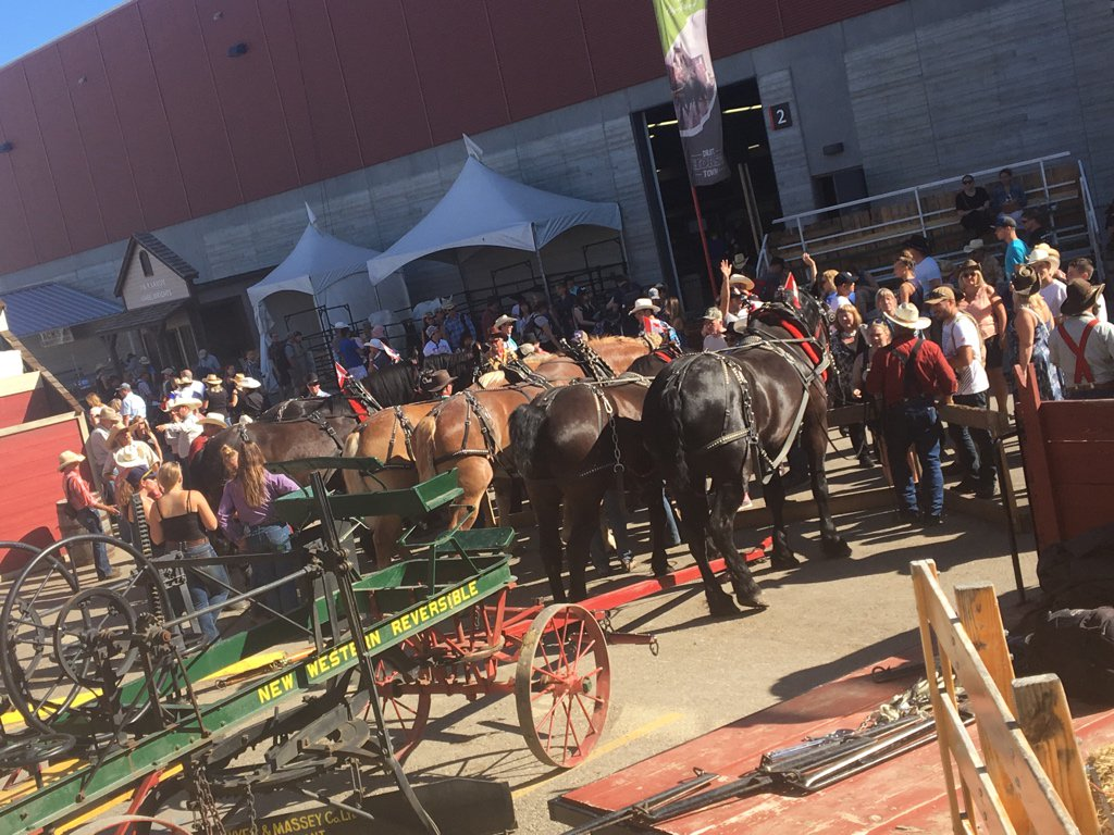 Draft horse town drafthorsetown twitter we thank everyone who joined us in town square for our final meet greet with our beautiful horses and equally beautiful teamsters and hitchers m4hsunfo
