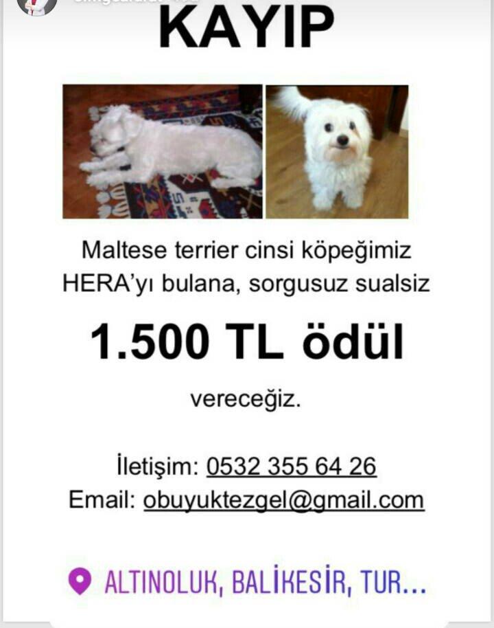 Arkadaşlar bu köpek çok sevdiğimiz hocamızın köpeği. Balıkesir Fener Altinoluk'ta kaybolmuş!