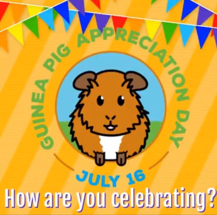 Happy #GuineaPigAppreciationDay ! from our team at LAGPR   #AdoptDontShop #GuineaPig<br>http://pic.twitter.com/uyCxIbPilA