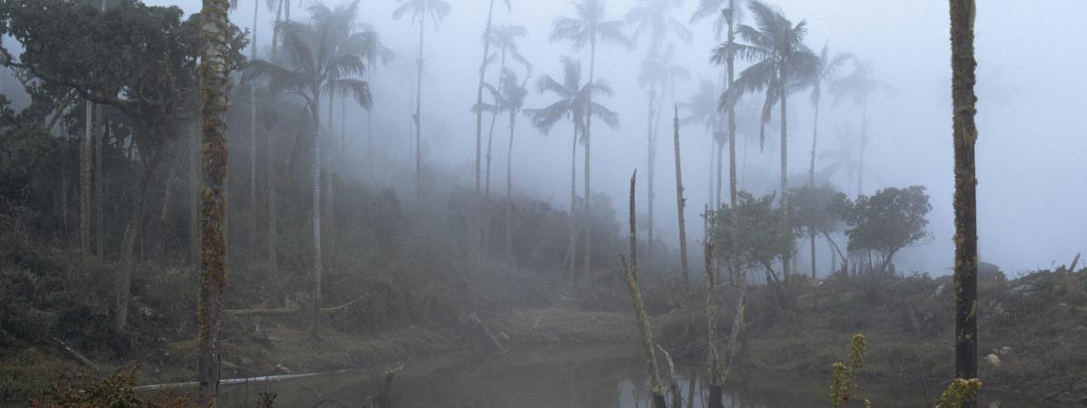 #Colombie : la #forêt a perdu une surface de l\