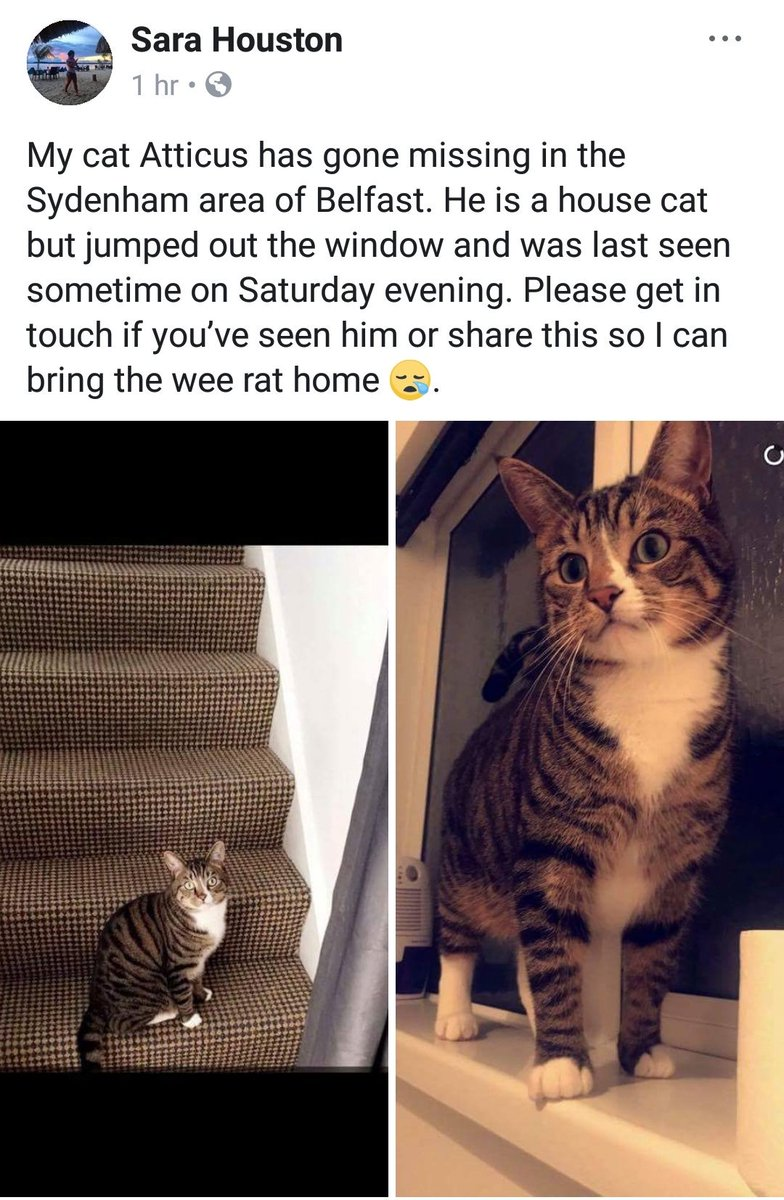 Hi East Belfast people. Can you help Sara find Atticus the cat? Pls RT and let's get him home 😿