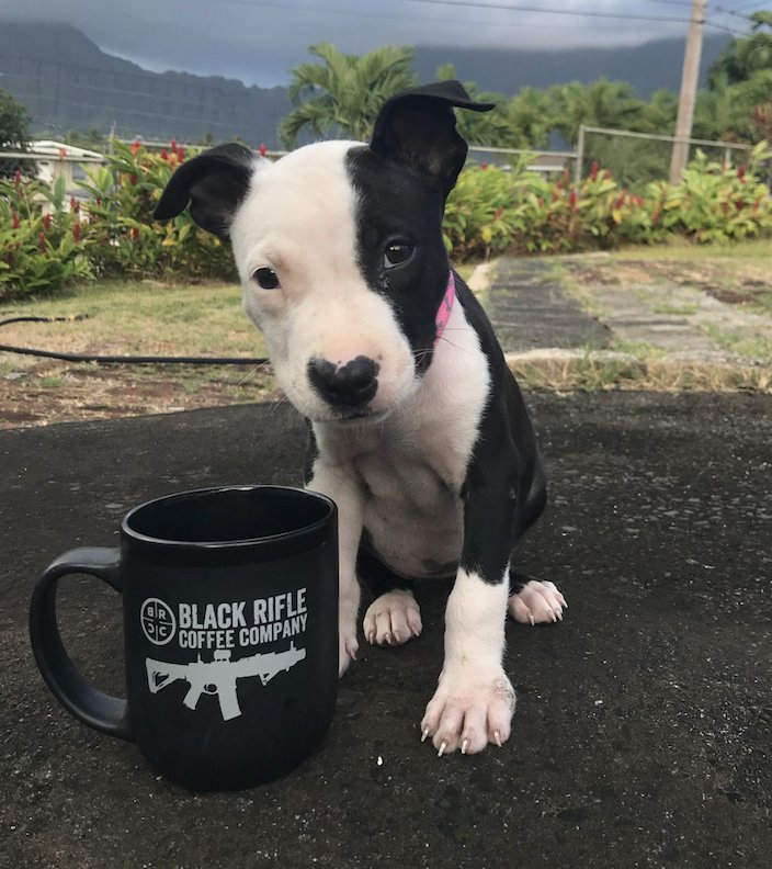 Monday came.. here's your coffee and puppy.
