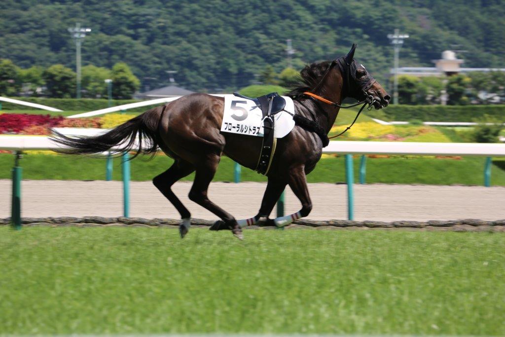 test ツイッターメディア - 2018.07.15 福島競馬8R フローラルシトラス号 馬場入場後~放馬しましたが、菜七子騎手を再び乗せて返し馬。 #福島競馬場  #藤田菜七子 https://t.co/Hc5BDkoTfb