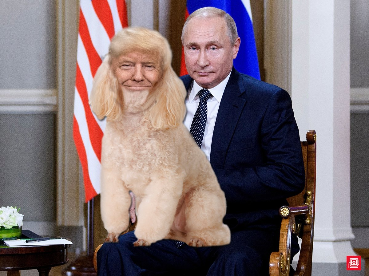 Image result for putin's poodle trump