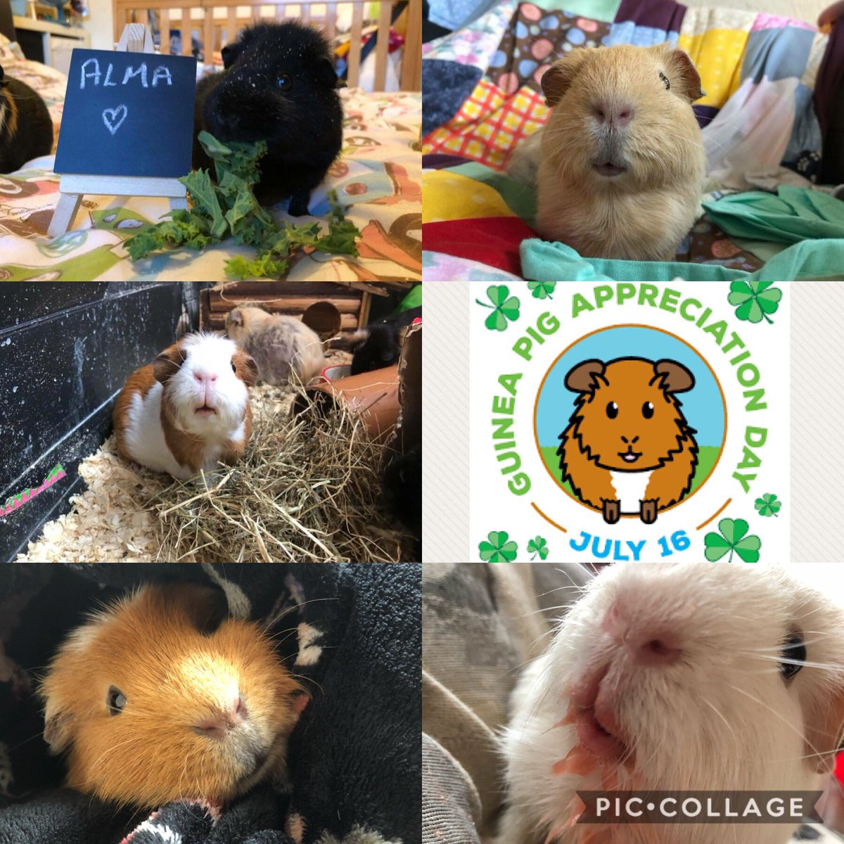 Happy #GuineaPigAppreciationDay from my babies & me #guineapig<br>http://pic.twitter.com/z4ByfBaXdl