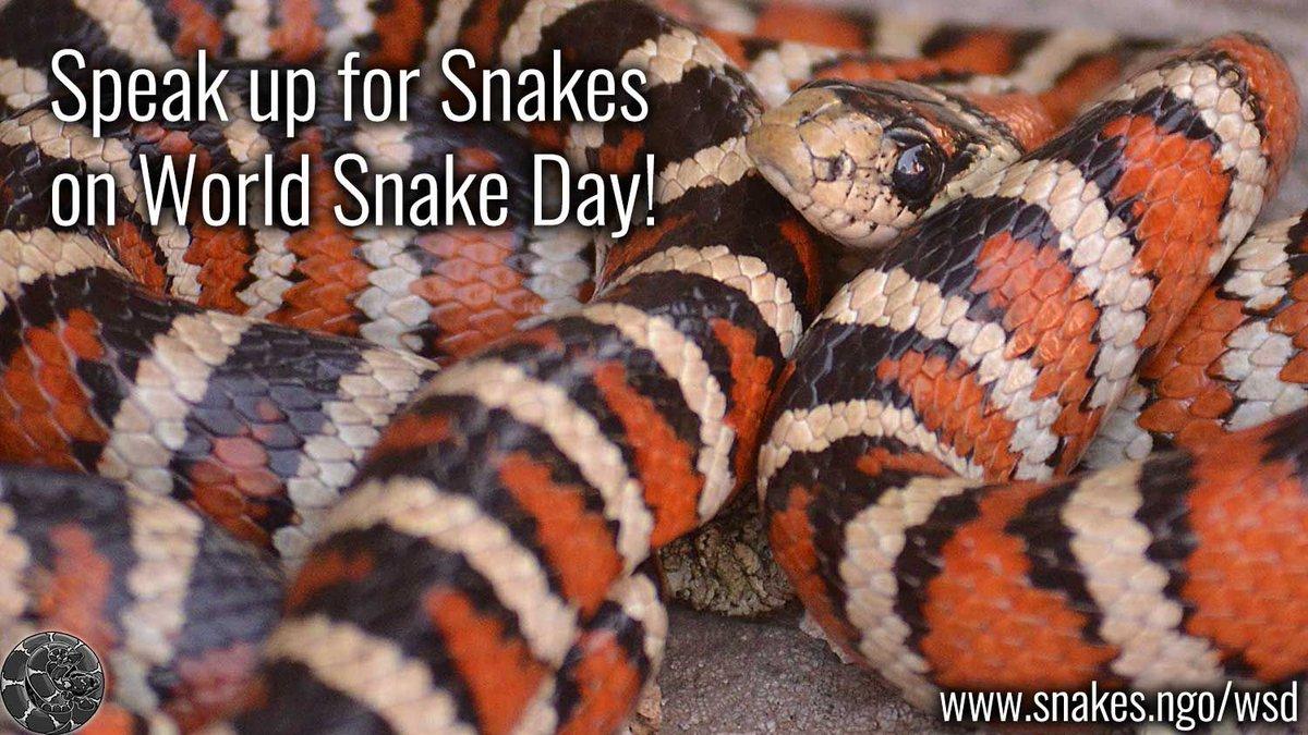 Snake Advocate (ASP) on Twitter: