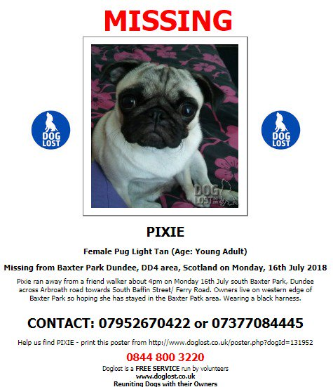 Doglost On Twitter Lost Dog Pixie Female Pug Dundee Dd4