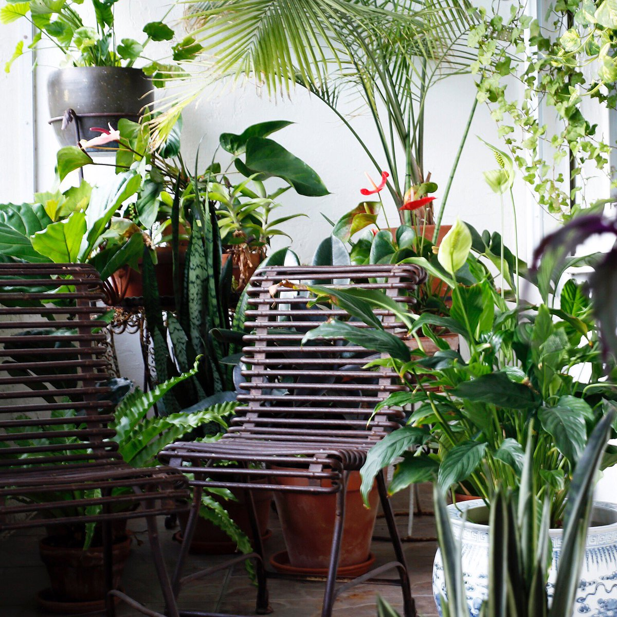 """""""Endless conversations with our plants."""" #antique #ironchairs #french #frenchironchairs #antiqueiron #decoratingwithplants #outdoorplants #balconyideaspic.twitter.com/CN4sASePWI"""