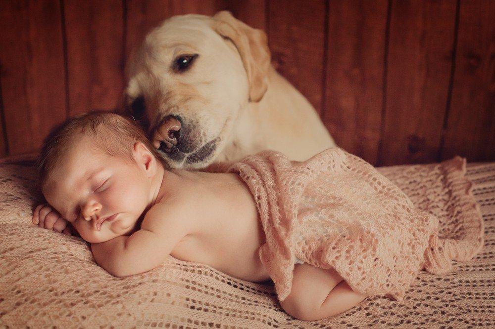 Смешные картинки с собаками для детей
