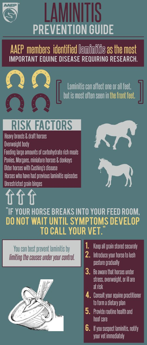 Stress related diseases in horses