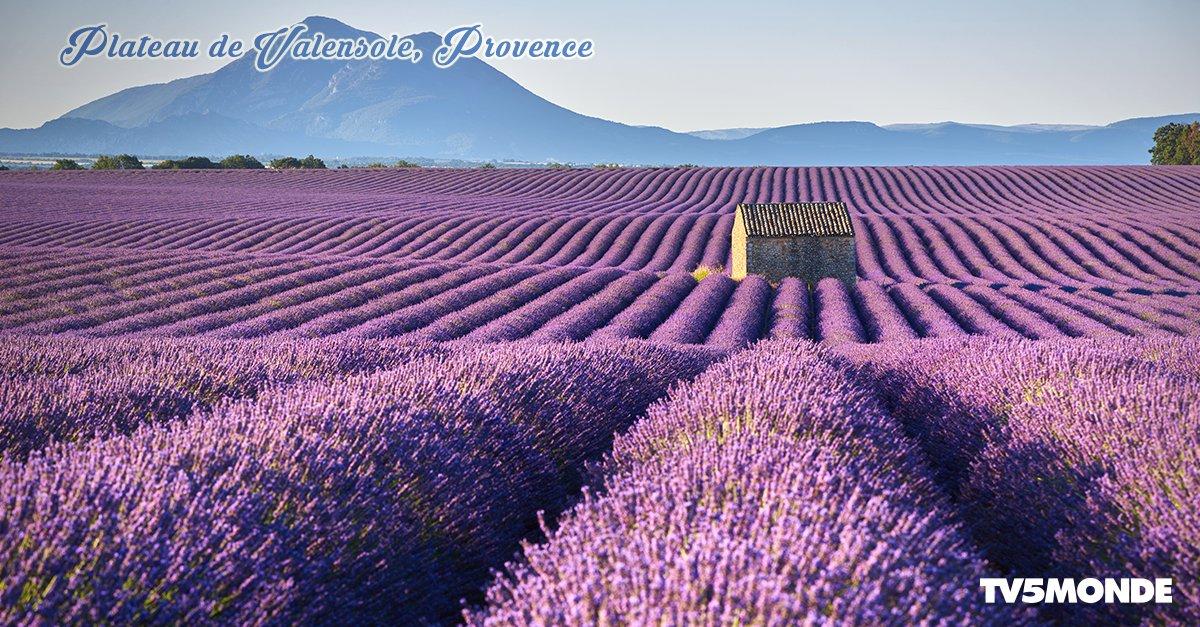 Entre juin et début août, les champs de #lavande de #Provence se transforment en un grand tapis violet ! Rêvez-vous d'admirer le plateau de #Valensole et ses lavandes fleuries 💜 ?